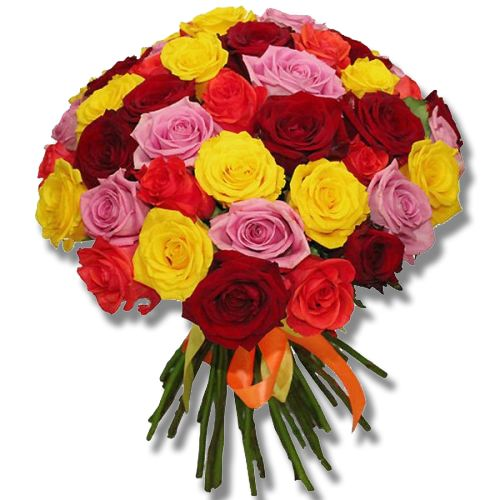 50 Color rose