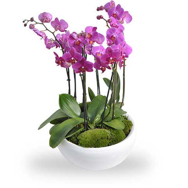 Pink Orchids Bowl