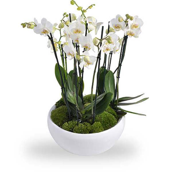 White Orchids Bowl